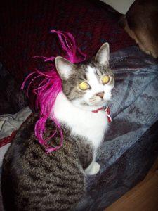 Vegas Show Cat