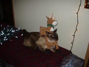 He's got a reindeer problem