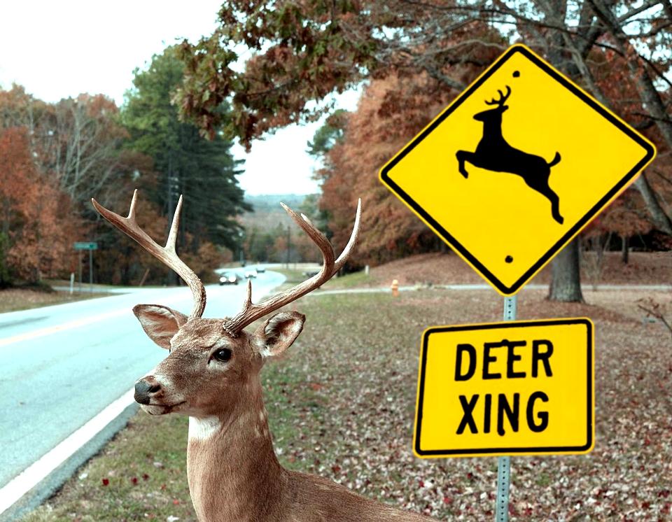 Semiotics of wildlife warning signs – Alina C Fisher