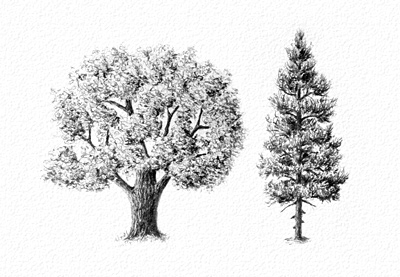 how-to-draw-trees-prev