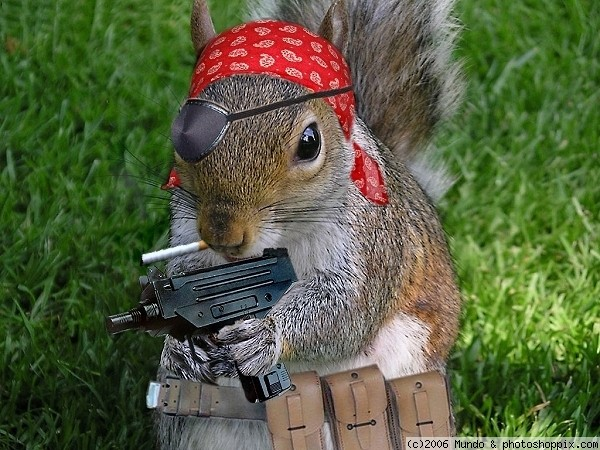 funny-gangster-squirrel-picture